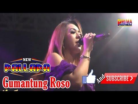 Download Lagu devi aldiva gumantung roso - new pallapa dirorejo mp3