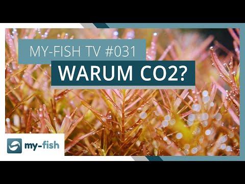 CO2-Anlagen und warum sie sinnvoll sind | my-fish TV