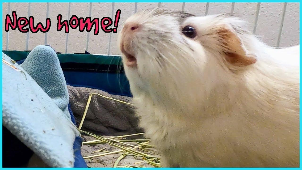 Guinea pig cage makeover!