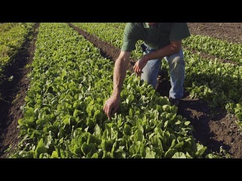 Arizona romaine lettuce farmers grow frustrated amid E. coli outbreak