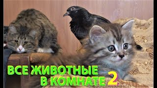 ВСЕ ЖИВОТНЫЕ В КОМНАТЕ 2 (собаки, кошки, котята, голуби, голубята и ворона)