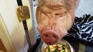 DINNER WITH SAMMY & HIS SIDEKICKS! Sweet dreams 💖