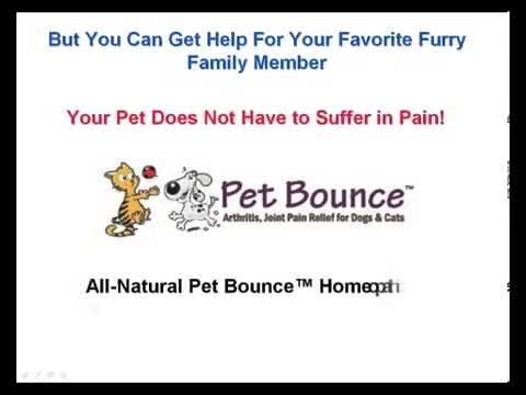 Another Pet Bounce Review: Arthritis & Joint Pain Relief
