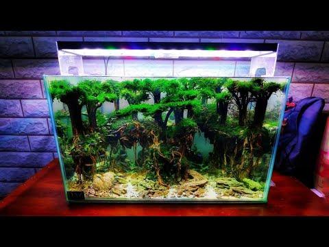 #130 Aquascape tema hutan Subtitle English - YouTube