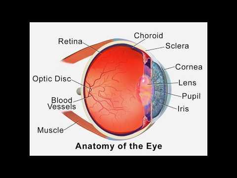 ∆°-eye-healing-hz---vision-improvement,-disorders,-optic-nerve-regeneration,---isochronic-tones