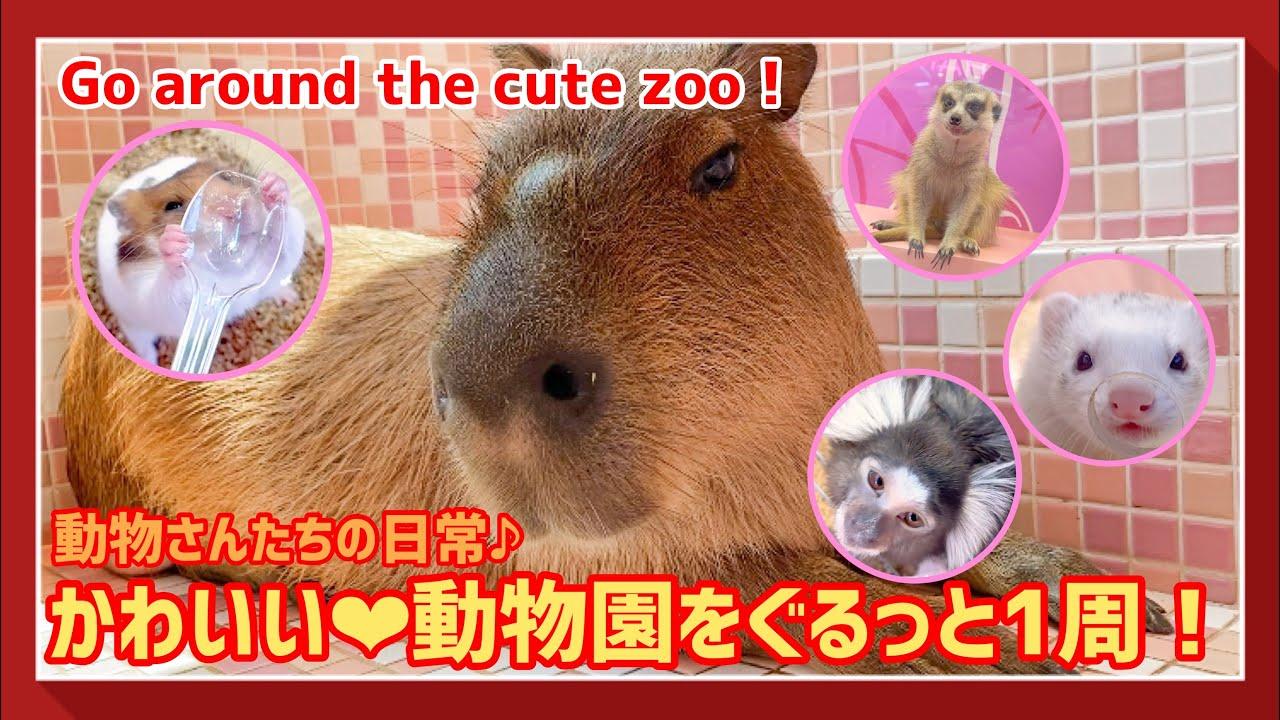 【カピバラ】原宿かわいい動物園の動物さんたち!園内をぐるーっと1周♪【ナスチャンネルさんご来店!!】