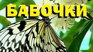 Галилео  Бабочки
