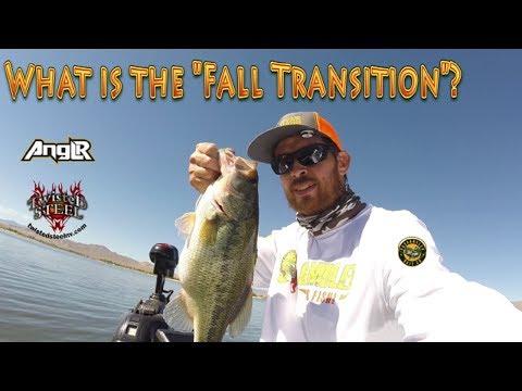 Fall Bass Fishing With BBC Vibrating Jigs | Magnum 7.75 Senkos | Anglr Bullseye