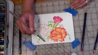 how to make painters reference files and  quick watercolor pencil carnations