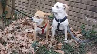 Sam & Lila January snow Good Dog Rescue