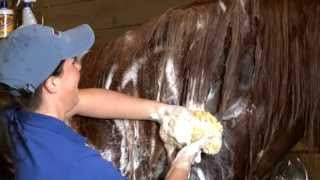 Horse Shampoo & Conditioner for Grooming: How to Use Mane 'n Tail's Original Shampoo and Conditioner