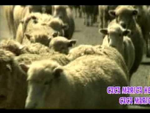 anak kambing Lagu anak tradisional zaman dulu kecil tak terlupakan versi asli Pas banget untuk hibur