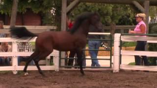 Varian Stallions Part 2: Sheila Varian 2011 Summer Jubilee