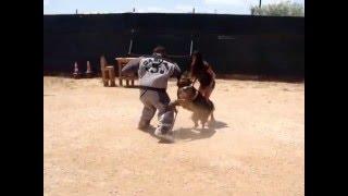 "Casual k9""dog training""club YARI THE BODYGUARD............."