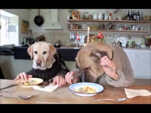 Dog Food Calorie Calculator How Much Should You Feed Your Dog