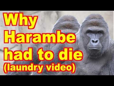 Why Harambe Had To Die (Laundry Video)