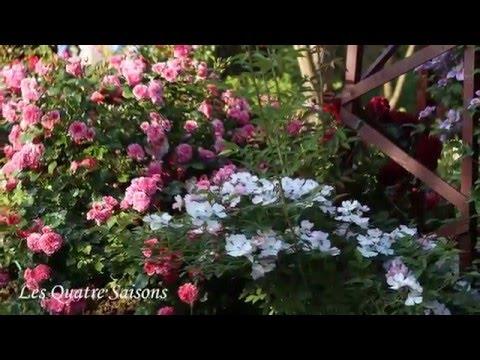 как создать розовый сад