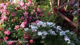 Розовый сад (35 фото): видео-инструкция как выращивать своими руками, как ухаживать, дизайн, фото