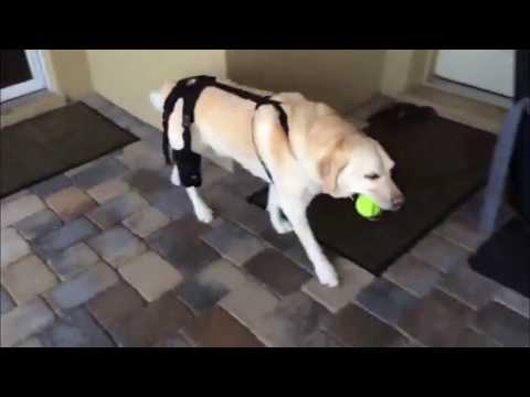 Ortho Dog Mobility Braces for Dogs