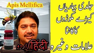 Apis Mellifica Symptoms in Urdu