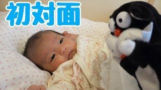 赤ちゃん に みーねこ リカちゃん えむずファミリーを 初対面させた結果 thumbnail