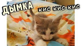✅КОТЁНОК ДЫМКА // КОШКИ 2019 // Funny Cats // СМЕШНЫЕ ЖИВОТНЫЕ // ПРИКОЛЫ // КОТЫ СОБАКИ И ДРУГИЕ