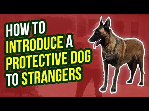 how-to-introduce-a-protective-dog-to-strangers