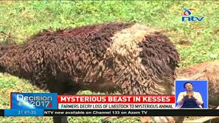 Beast drinks blood from sheep and leaves them to die in Uasin Gishu