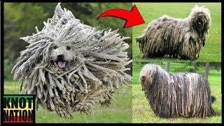 3 Types of Dreadlock Dogs