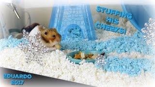 SNOWY WINTER HAMSTER CAGE TOUR