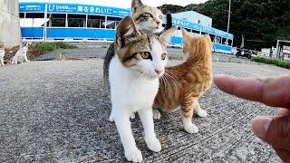 【猫家族】人懐っこい三毛猫母さんが子猫をゾロゾロと連れてきた