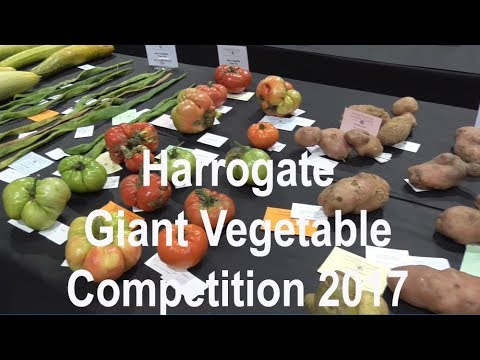Harrogate Giant Vegetable Competition 2017