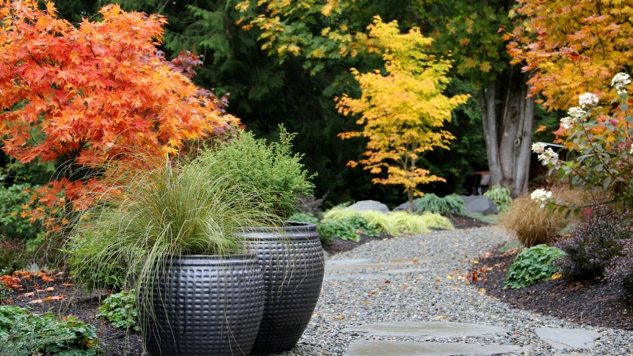 Garden Design Japanese Maple Garden Design Ideas Youtube