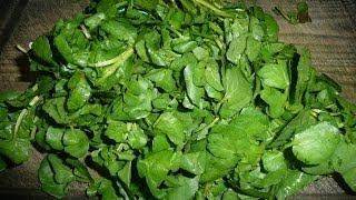 How To Juice Watercress Recipe Vegan Iodine