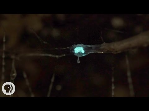These Carnivorous Worms Catch Bugs by Mimicking the Night Sky  | Deep Look