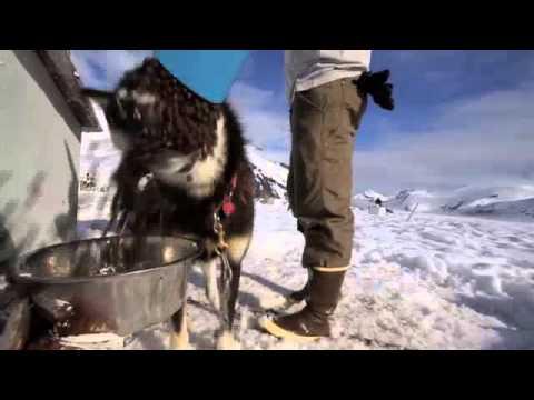 Dog Sledding Tours Juneau Alaska
