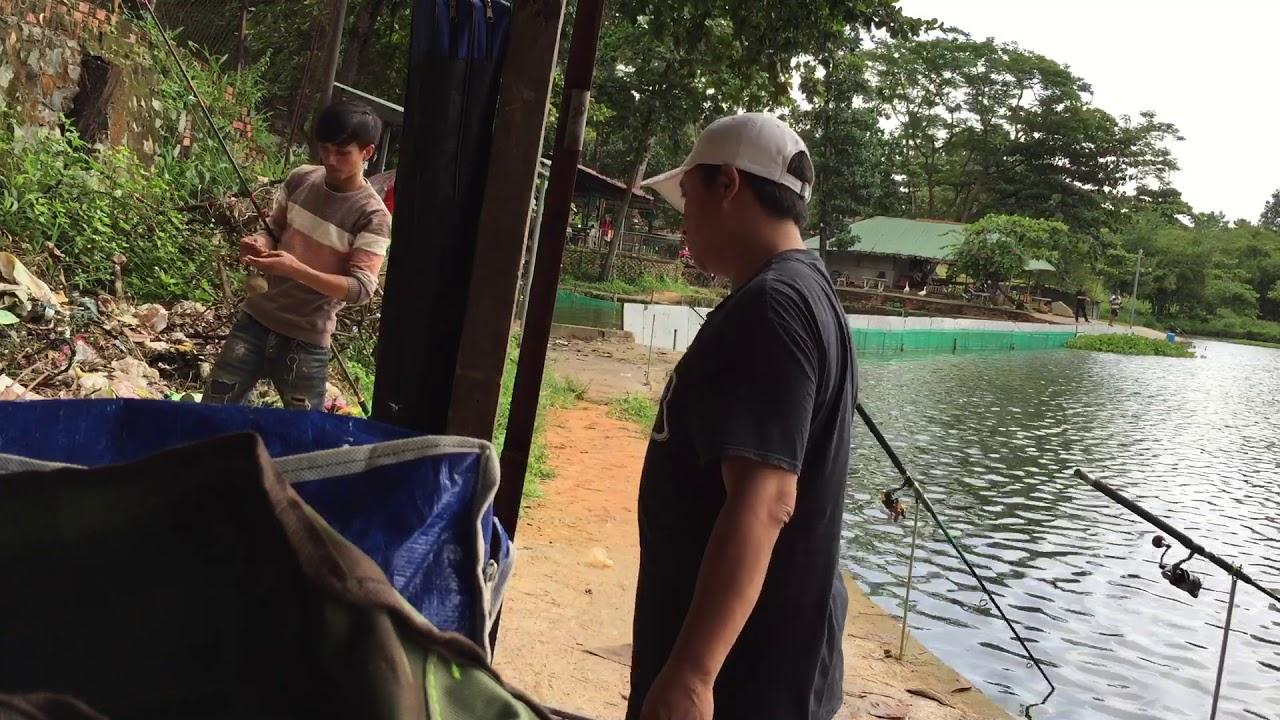 Hồ câu cá sinh viên  cá ăn mạnh  thẳng cây