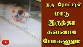 ரோட்டில் மாடு இருந்த கவனமா போகணும் - Cow | Highway | Chennai