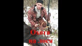 охота на лося видео 2016 г