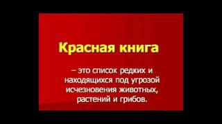 ТОП 5 ЖИВОТНЫХ ЗАНЕСЕНЫХ В КРАСНУЮ КНИГУ!