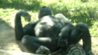 vuclip Funny horny monkey video