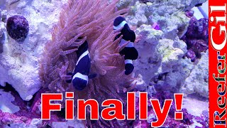 How To Get Clowฑfish To Host Anemone