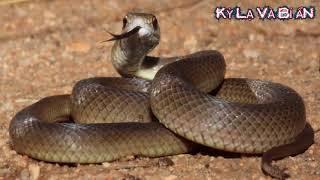 Nếu gặp 10 loài rắn kỳ lạ này bạn phải chạy thật nhanh nếu muốn sống