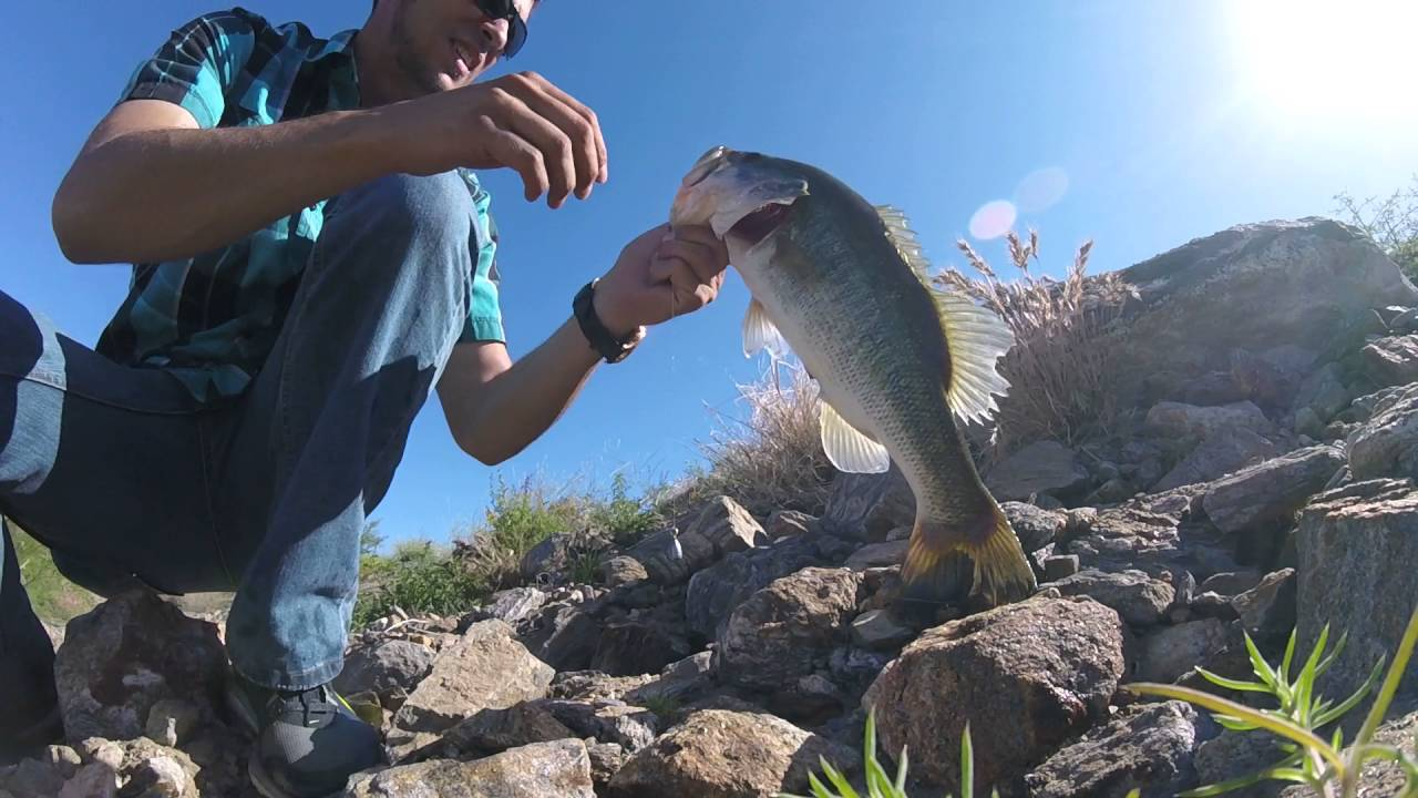 Bass fishing diamond valley lake youtube for Diamond valley lake fishing report