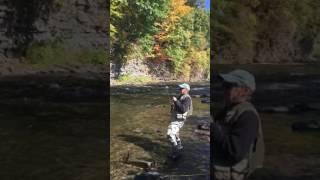 Larrys large salmon