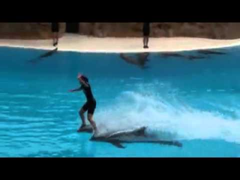 Dolphin show in swimming pool