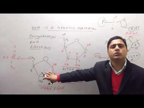 12th Biology Molecular Bases of Inheritance IN HINDI Part 3 BEST EXPLANATION thumbnail