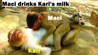 Unbelievable..! Funny Maci Drinks Kari's Milk & DeeDee's Milk Coz Merry Not Allow Milk So Hungry thumbnail