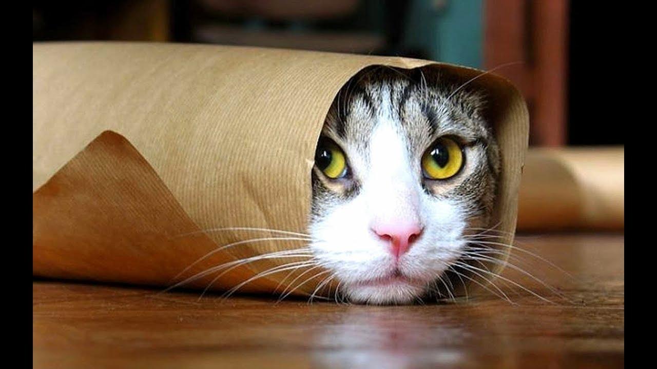 Смешные коты фотки ржака