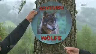 Warnschilder vor Wölfen ORF Kärnten heute